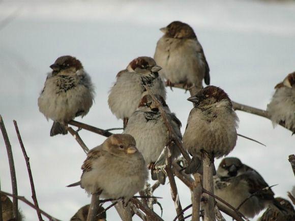 Птичья помощь