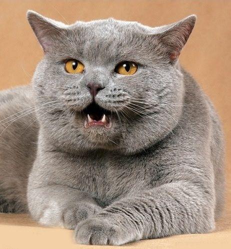 Ревнивая кошка
