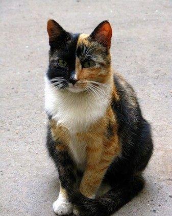 Мурка — чудо кошка! )
