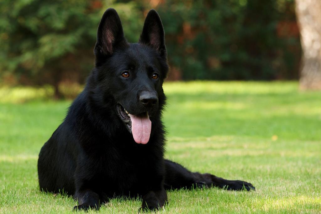 Лучший друг — собака