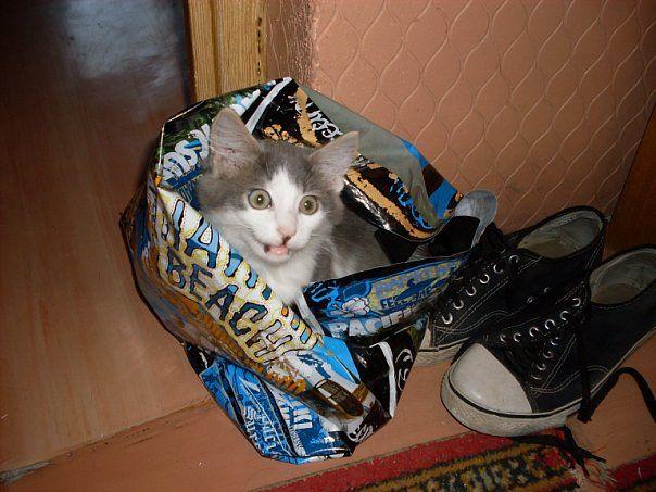 Кот, которого могли и утопить
