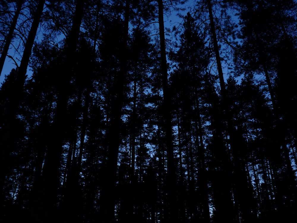 Ночь. Деревня. Вишня.