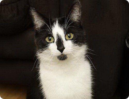 Котенок по имени Лиска