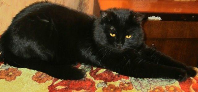 Мой черный кот
