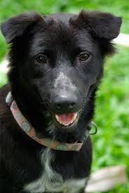 Собака друг (трогательная история)
