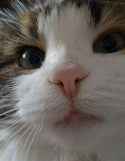 Как моя кошка с балкона летала
