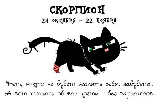 История любви со скорпионом.