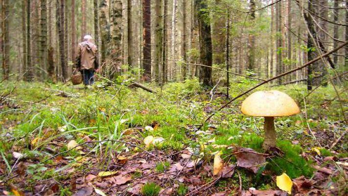 Поход по грибы, или провал во времени.