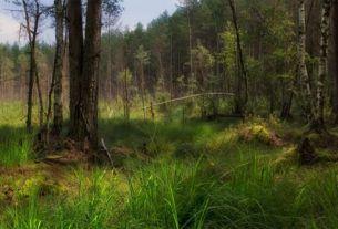 Покос. Лес и болото