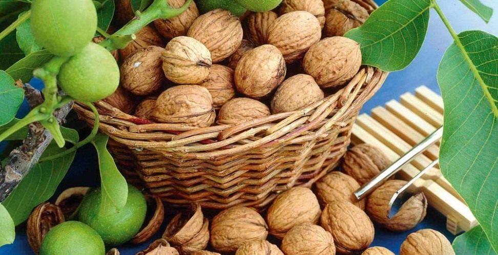 Как мы орехи собирали.