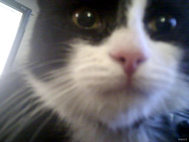 Кошка засранка…