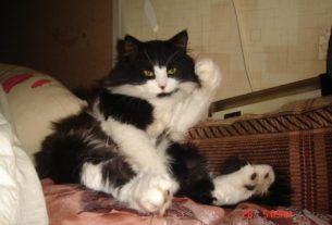 МОи кошки_3 (Про кота Микешу)