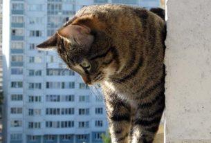 Кошка выпрыгнула с 5 этажа