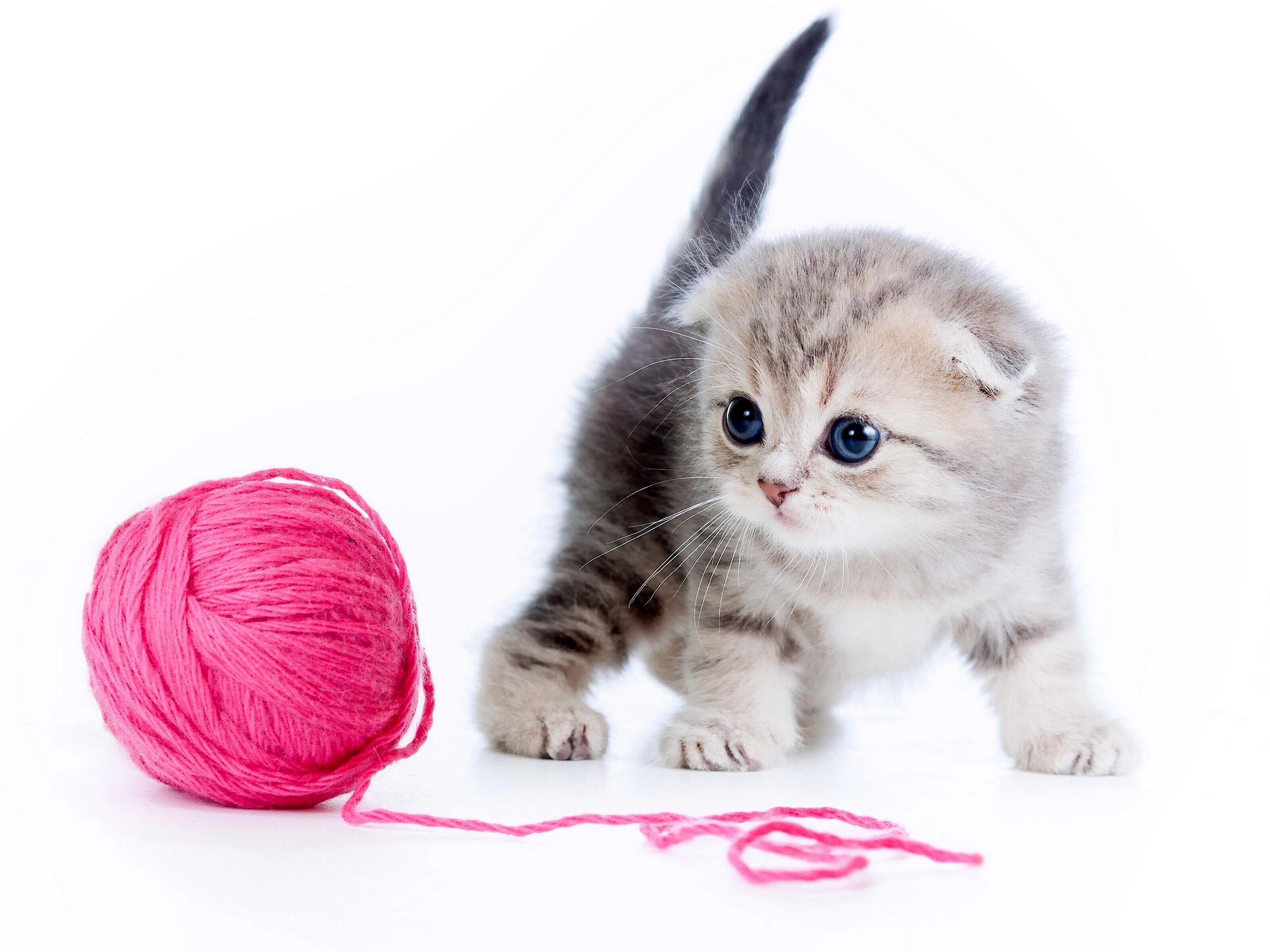 история о том, как я котенка приютил