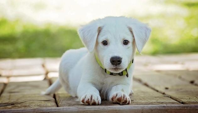 Собака Часть Вторая