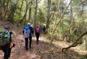 Поход с друзьями в лес