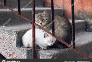 Кошки — хранители домашнего уюта