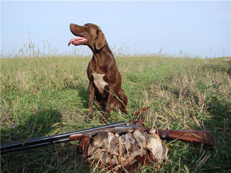 Какие собаки помощники в охоте