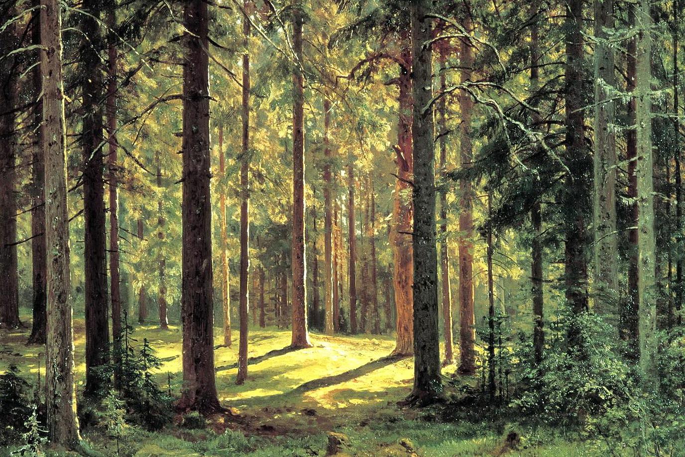 Встреча в лесу с непонятно чем.