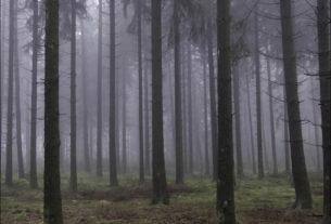 И больше я в лес не ездил!