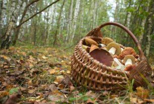 Поход в лес за грибами