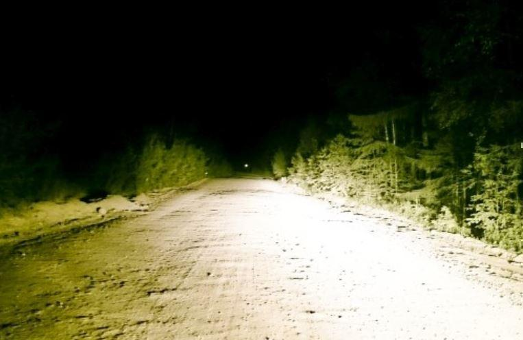 Жертва на ночной дороге