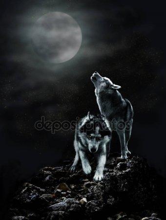 Встреча с волками