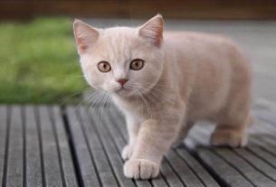 Кот-мистик