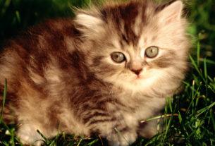 история о том, как я нашел недавно родившегося котенка и приютил!