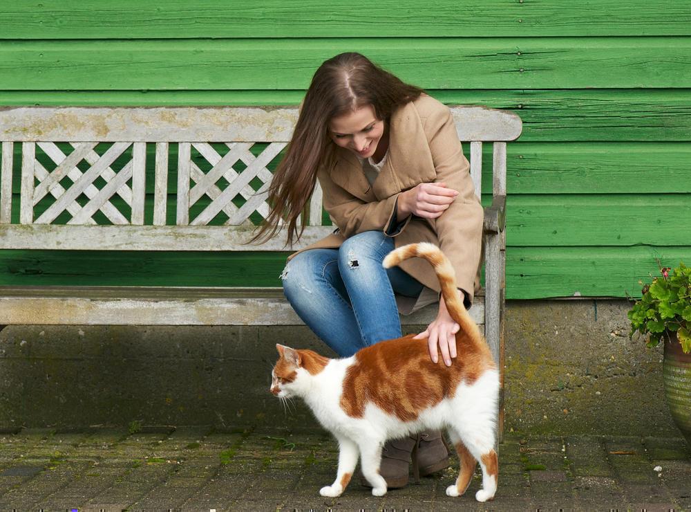 Кот спас от разбойника