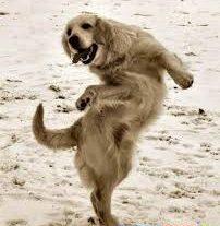 Плюс «лечит» и танцует.