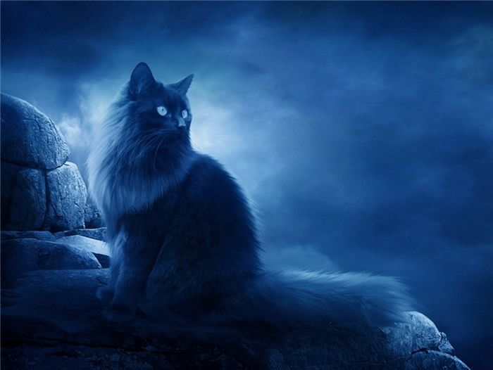 Мистический кот